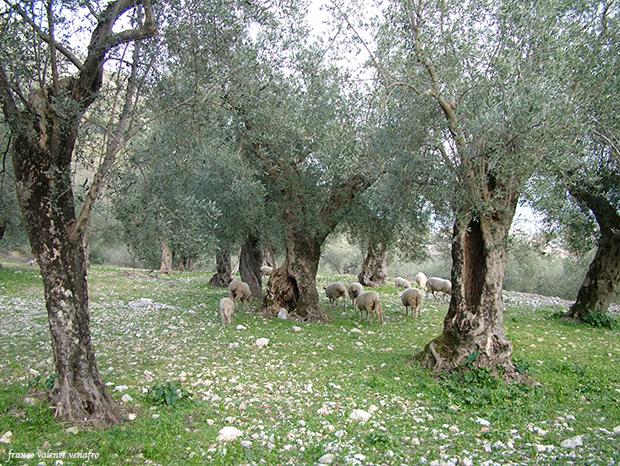 OliviVenafro1